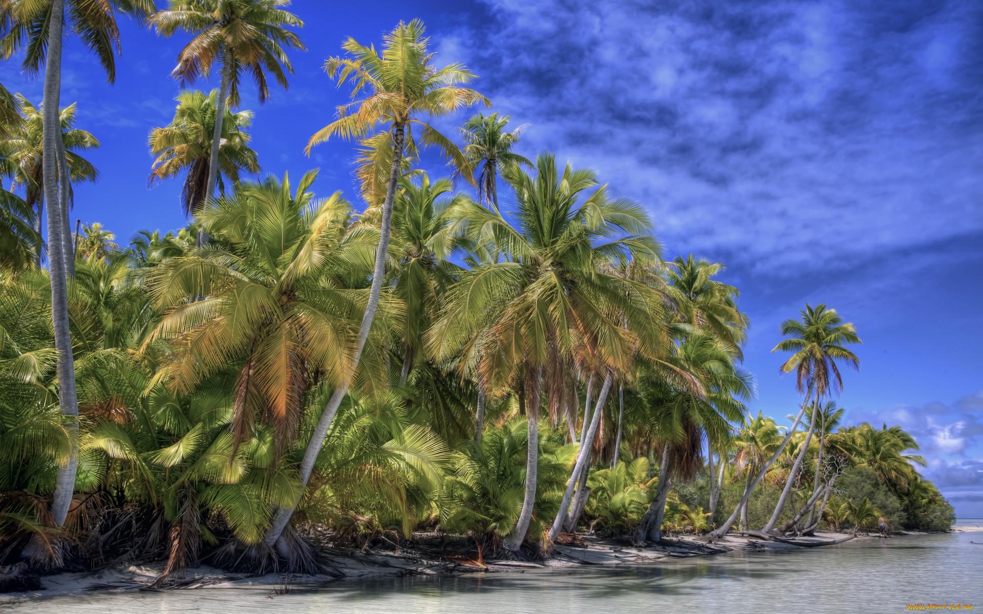 фото пальма тропики доставка пилиломатериалов регионам